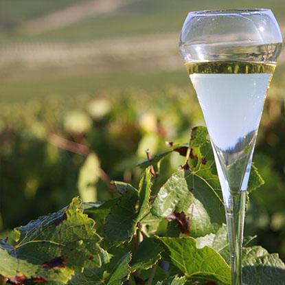 Le Champagne des vignes de l'Aube